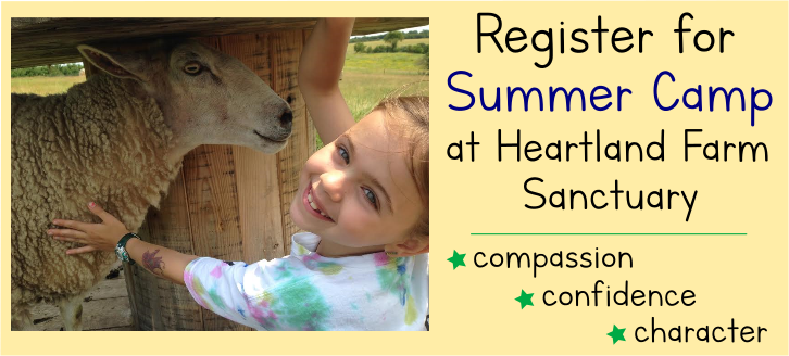 Heartland's Summer Camp